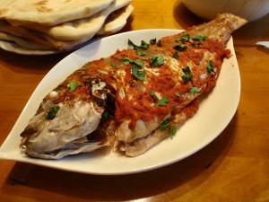 صور سمكة حرة