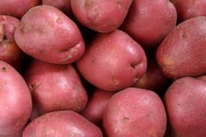 البطاطا الحمراء