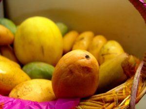 انضاج ثمار المانجو